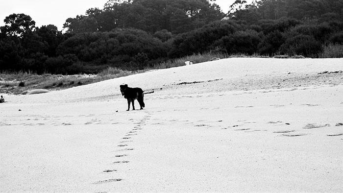 walking_on_thebeach