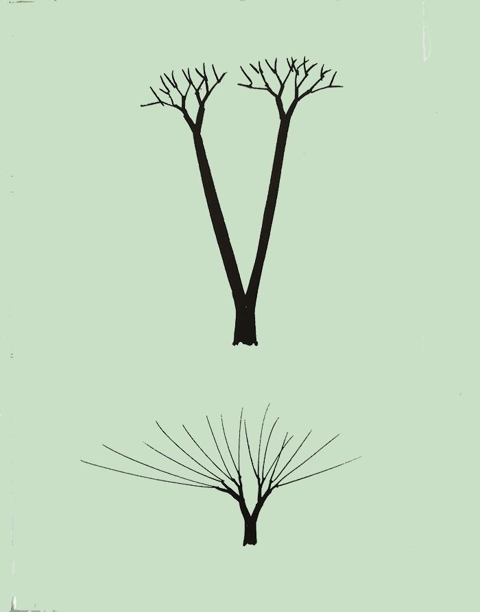 dibujar un árbol-tronco alto o bajo