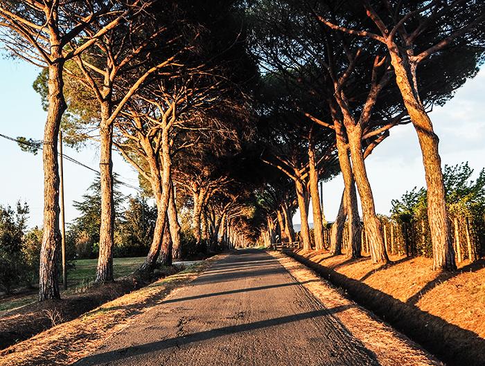 toscana-maremma-carretera-tuscany_street