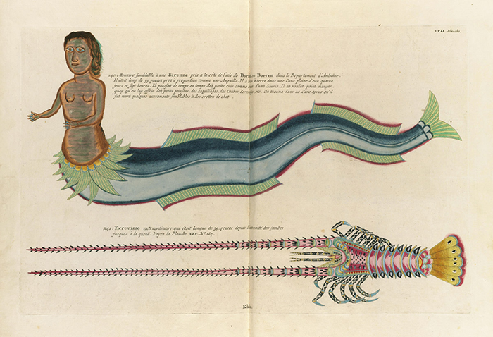 viajar-mermaid-louis renard